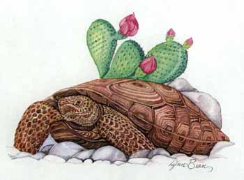 Tortoise with Cactus.